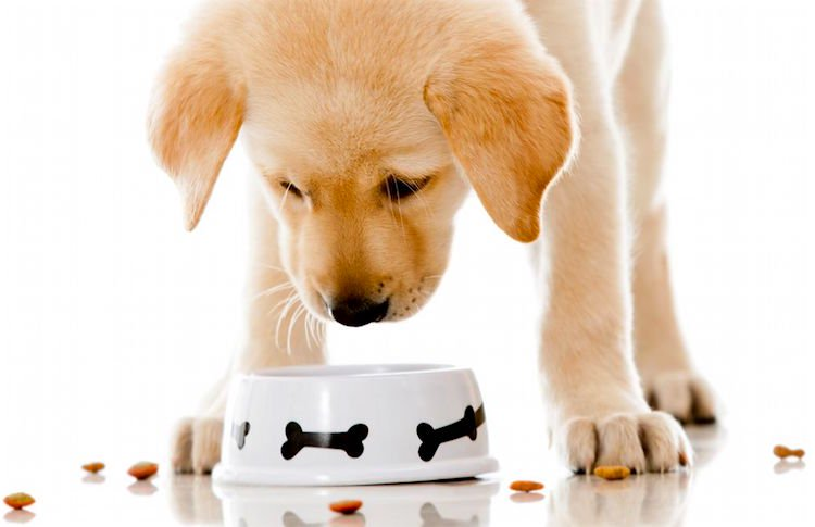 Worst dog food brands – Look for the ingredients.